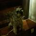 她叫apple是史黛西的狗,超可爱的!
