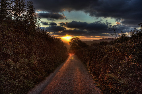 road autumn trees light england sun sunlight sunrise landscape dawn countryside devon hedge lane hdr octoberchallenge photoadayforamonth
