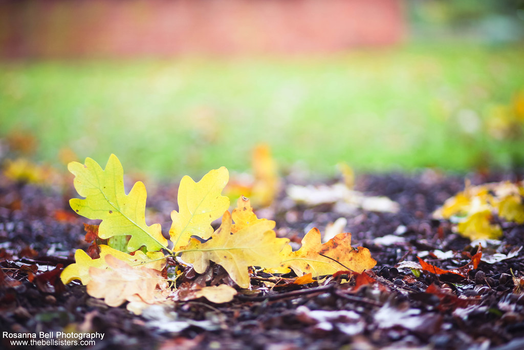 Autumn Leaves - Day 291/365