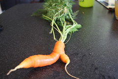 Carrot - home grown
