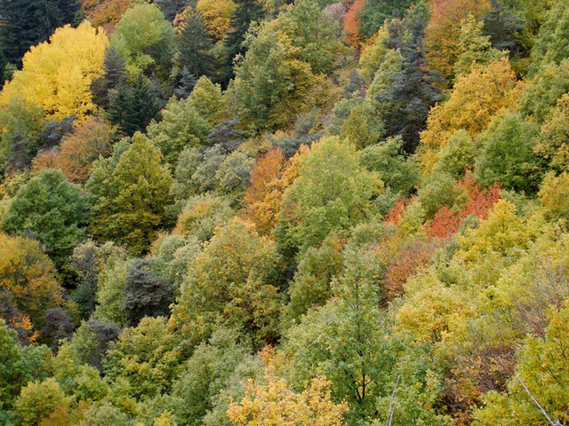colors of trees @Chambon