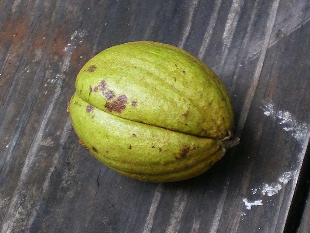 hickory-nut-082111 0144