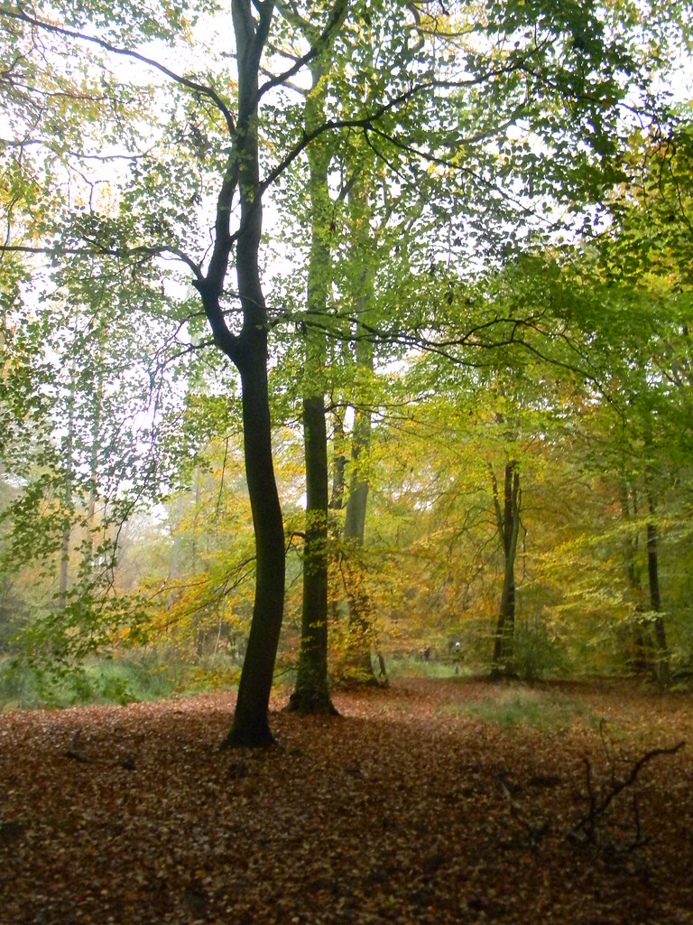 Autumn Colours 3 Princes Risborough to Great Missenden Monkton Wood