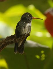 Guyana-0958