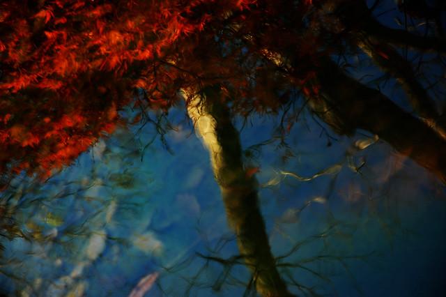 Water Garden Music - Autumn