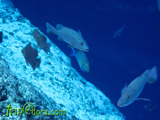 Fish at the Enchanted River