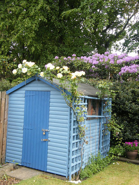 Beach hut style shed flickr photo sharing for Beach hut style