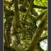 BRANCHY TREE by ADHAM HAWRAMY
