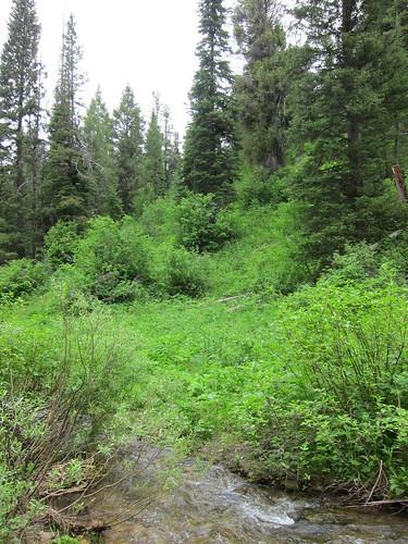 stream, creek, water, mountains, tetons IMG_6871