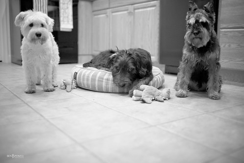 Day 297 - Guard Dogs
