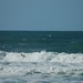 Small photo of Kelly Slater getting barreled at Ocean Beach.
