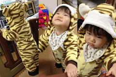 今夜は虎とらちゃん(2011/11/21)