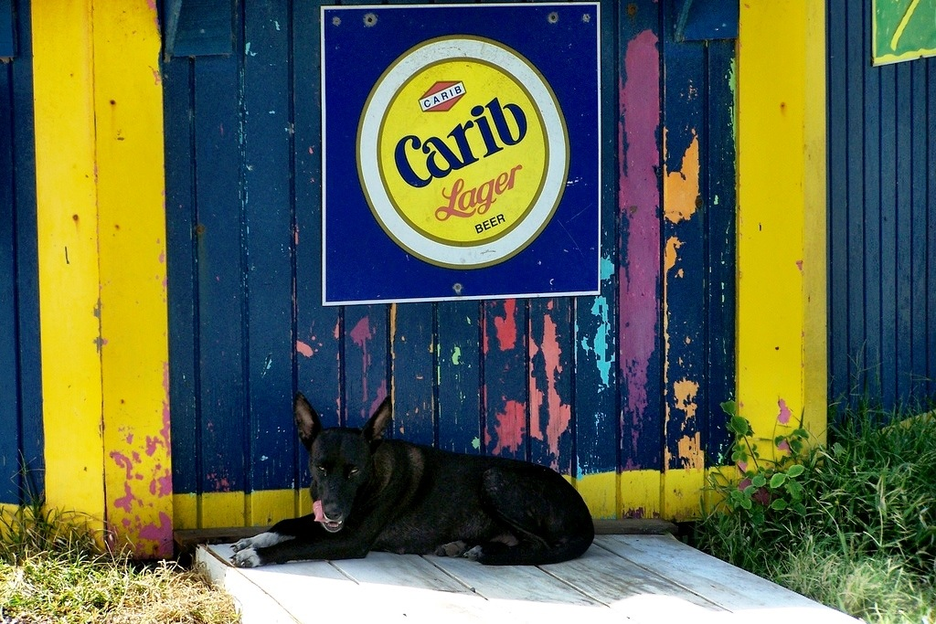 Dog on St. Kitts