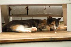Pet Md Cat Weight Loss