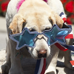 Dog at CdA 4th of July Parade - photo by 29k Productions, LLC