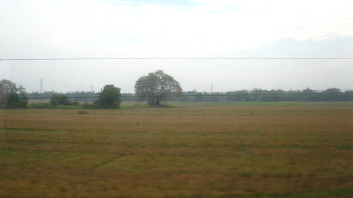 morning sky field wire paddy panoramic