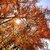 Sunny fall day in MA #fall