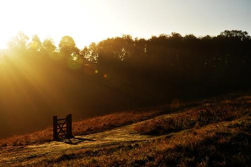 autumn trees tree forest woods heath hertfordshire royston roystonheath