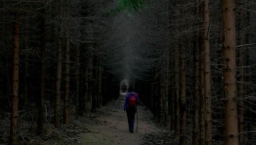 nature forest természet erdő fenyő