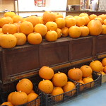 pumpkins at coventry market