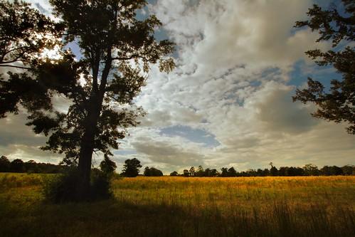 autumn trees tree field landscape louisiana seasons goldenrod pasture backlit 10mm canonefs1022mmf3545usm mrgreenjeans gaylon peairsrd pridelouisiana gaylonkeeling