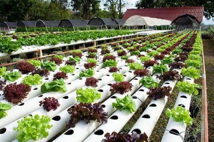 homemade hydroponics