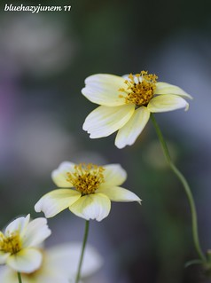 Winter Cosmos #2