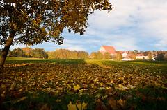 Autumn in Kaunas, 2011.10.23