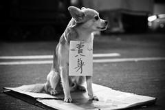 Poor dog...[Nov 12th Explored]