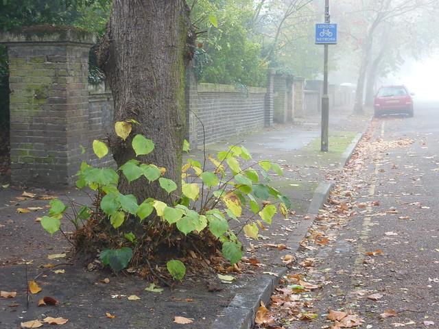 Sunday fog_0126