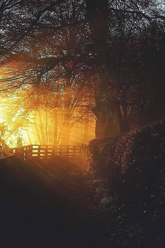 Autumn sun reflection by mamietherese1