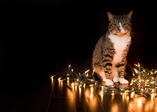dapper cat is festive.