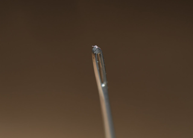 Eye of a Needle