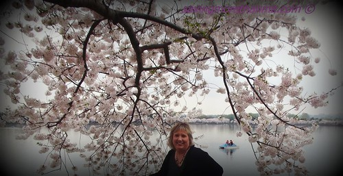 Kimberly & A Gorgeous Cherry Blossom Tree
