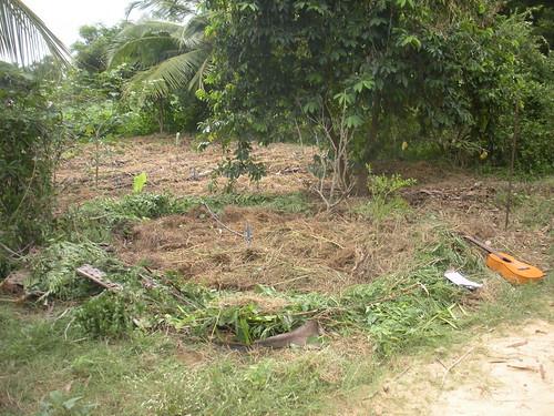 permaculture circle garden