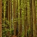 Redwood Forest Walk
