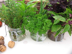 flowerpot, vegetable, flower, plant, herb, produce, food, fines herbes,