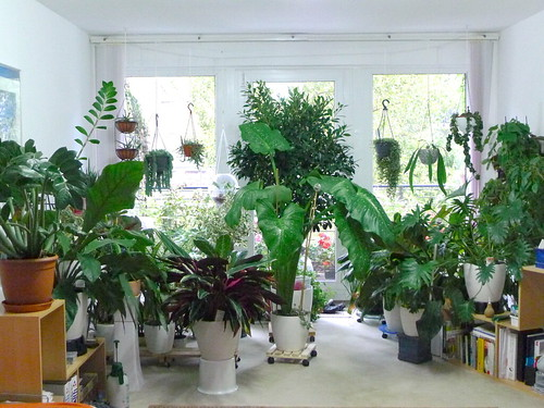 Addicted to house plants Large living room plants
