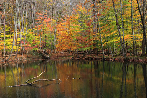 autumn nature foliage jockeyhollow morriscounty absolutelystunningscapes blinkagain bestofblinkwinners blinkagainsuperstars blinksuperstar
