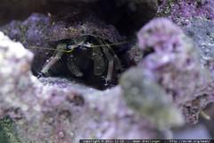 hermit crab    MG 1995