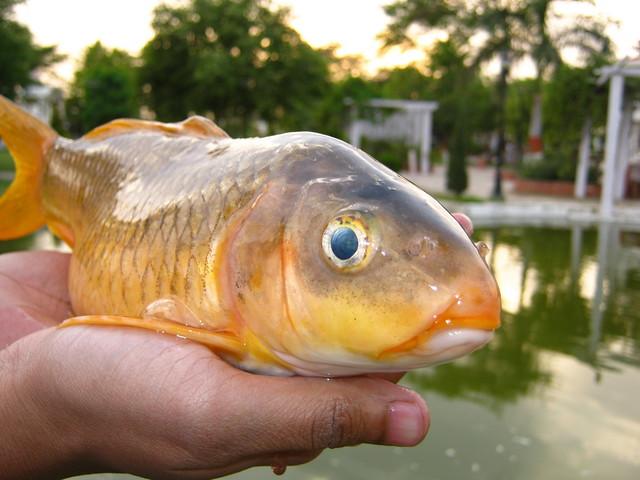 Dead fish!