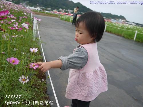P1130078花海