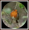 It's that Robin again! by PHILIP.ISOM