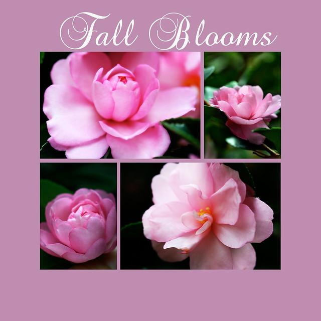 fallblooms