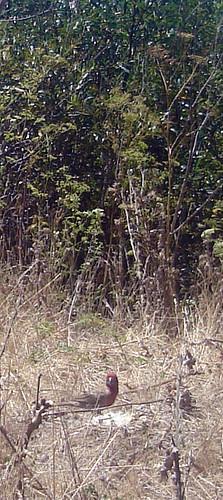 DSC00380.crop.jpg