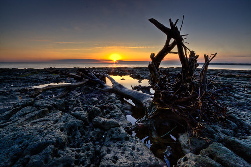 tree beach sunrise canon project island dawn march big rocks jeremy amelia 365 1000 bluff talbot 2012 duguid 366 50d pwlandscape jeremyduguid