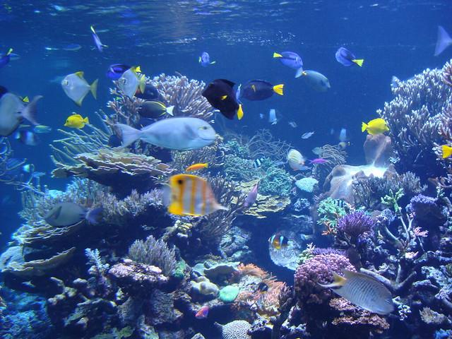 Aquarium In Riverhead Ny