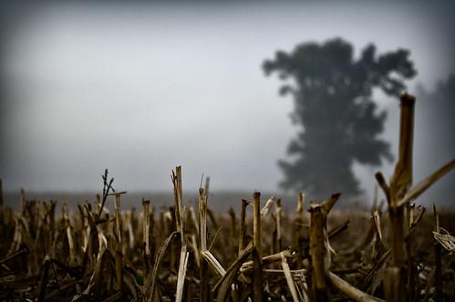 fog sunrise river corn cornfield farm tennessee clarksville cumberlandriver