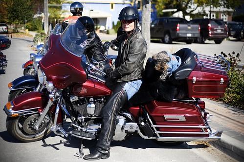 Biker Pooch