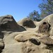Mount-Diablo-2011-10-22